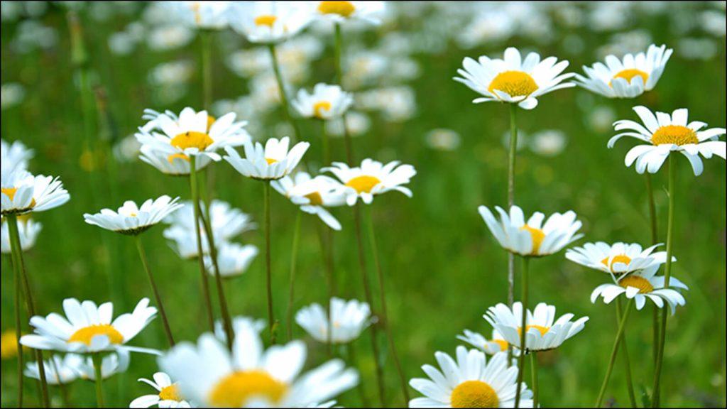 イメージ。カメラで撮影したボケ画像。背景をうまくぼかした花の写真。